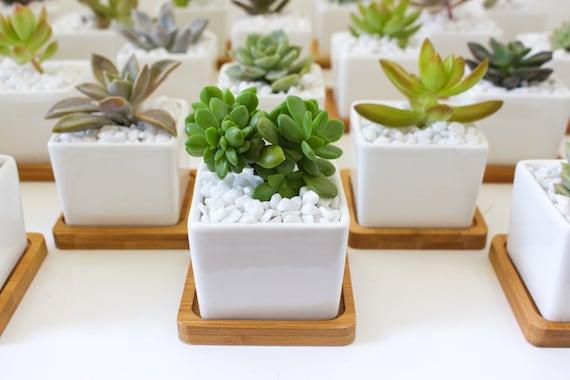 Medium Square Ceramic Pot Wedding Favour
