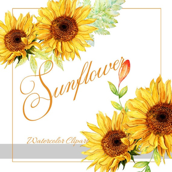 Sunflower Watercolor Clipart Rustic Fall Flower Vibrant Etsy