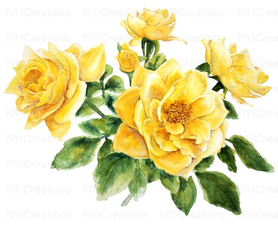 Watercolor Yellow Rose Clipart Hand Painted Flower In Mason Etsy