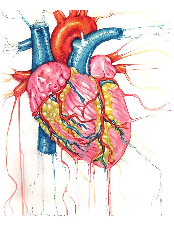 Herz Malerei Druck anatomische Anatomie Herzdruck | Etsy