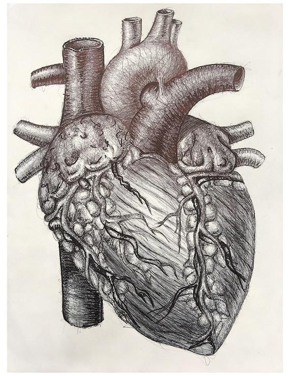 Herz-Zeichnung Anatomie Herz Druck anatomische Wandkunst | Etsy