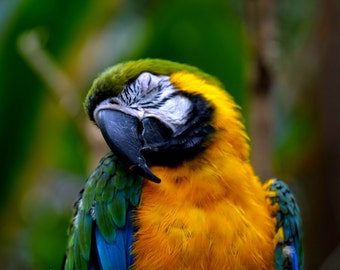 Macaw, Wildlife Photography, Nature Photography, Bird Photogeraphy