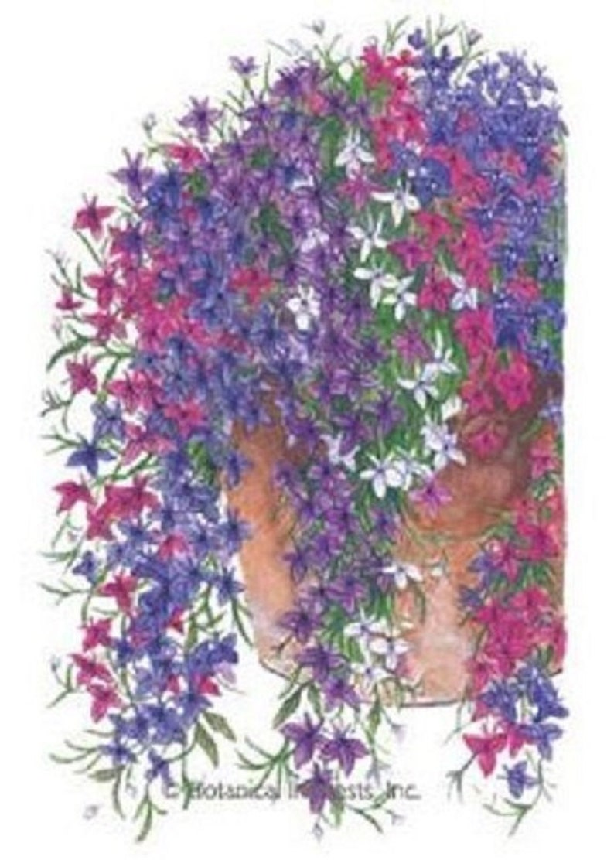 50 Lobelia Regatta Trailing Mix Perennial Flower Seeds Etsy
