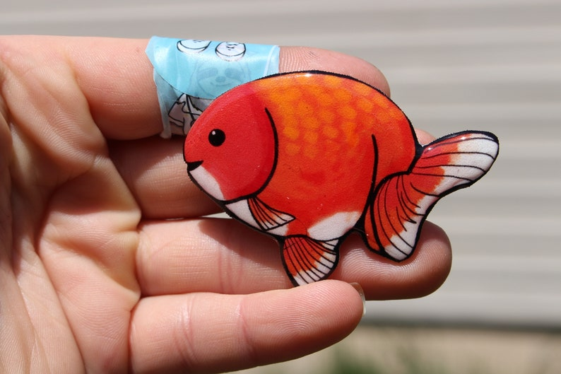 Ranchu Magnet: Gift for Goldfish lover or fancy fish loss memorial cute  fish magnets for locker or fridge