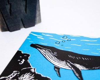 Postcard Whale, animal illustration, greeting card illustration, scratchboard, black white blue, wildlife postcard