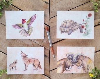 Sonoran Desert Fauna Notecards 4 Pack, scientific illustration, Tortoise card, Bighorn Sheep card, Hummingbird card, Coyote card, greeting