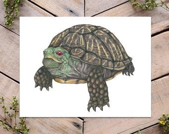 Desert Box Turtle Art Print, Sonoran Box Turtle, Science Illustration, Male Box Turtle, Turtle Art, Cute Turtle, Reptile Illustration