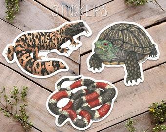 Desert Reptile Stickers, lizard sticker, turtle sticker, snake sticker, Sticker Illustration, coral snake art, box turtle art, gila monster