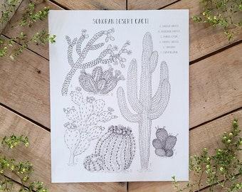 Sonoran Desert Cacti, Cactus Art Print, Scientific Illustration Plate, Inked Cactus Species Art, Cholla, Mammilaria, Barrel, Saguaro drawing