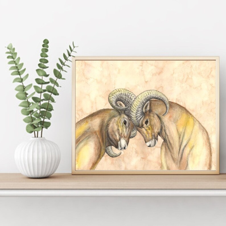 Bighorn Sheep Dispute Art Print Scientific Illustration Ram