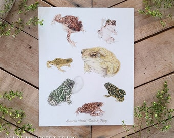 Desert Toads and Frogs Scientific Plate Art Print, scientific illustration plate, biology art, sonoran toad, green red spotted, narrowmouth