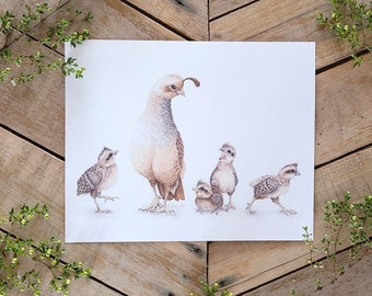 Patient Quail- Scientific Illustration- Quail Family- Funny desert Wildlife, Birds, Watercolor & Graphite, Baby Quail Art, Quail Mom young