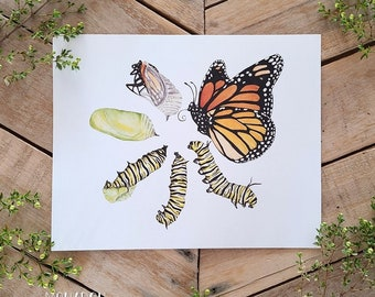Monarch Metamorphosis Art Print, Monarch Butterfly Illustration, Caterpillar to Butterfly Transformation Scientific Illustration Science ART