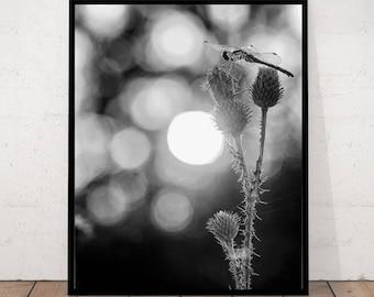 Libelle-Druck, Libelle Fotografie, schwarz-weiß-Fotografie, moderne Fotografie, Libelle Dekor, Libelle Wandbilder, Libelle