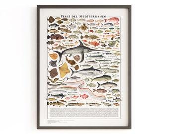 Poster - Pesci del Mediterraneo