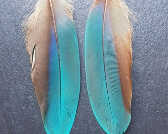 Natural Blue Parrot Feather Earrings | Handmade by Shipibo Artisans