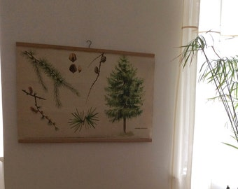 Vintage School Poster - Pull Down Chart - Old School Poster - Botanical Drawing - Original 1970s Poster - Antique School Poster