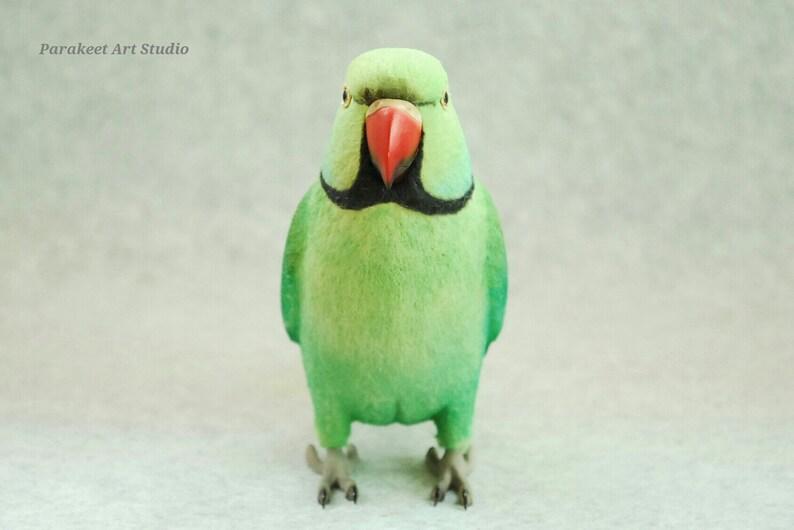 Ringneck Parrot Ringneck Parakeet Ringneckparrot Indian Etsy