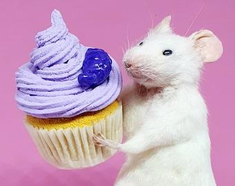 Taxidermy Mouse with cake, cupcake, birthday ~ oddities, curio, curiosities