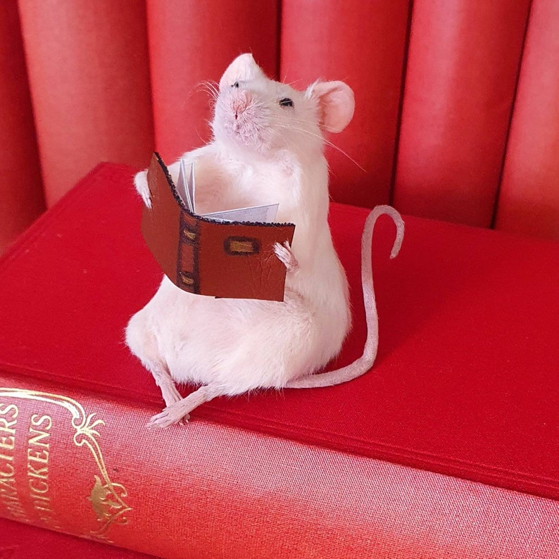 Taxidermy Mouse with book reading  oddities curio image 0