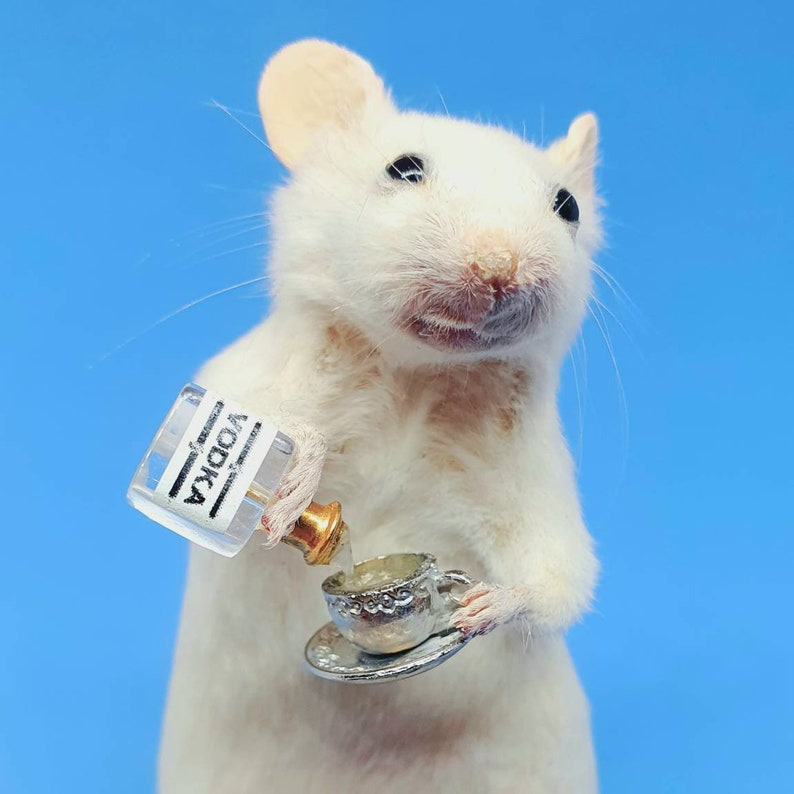 Taxidermy Mouse with VODKA and teacup  oddities curio image 0