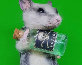 Mouse with poison bottle, arsenic, taxidermy, curio and oddities