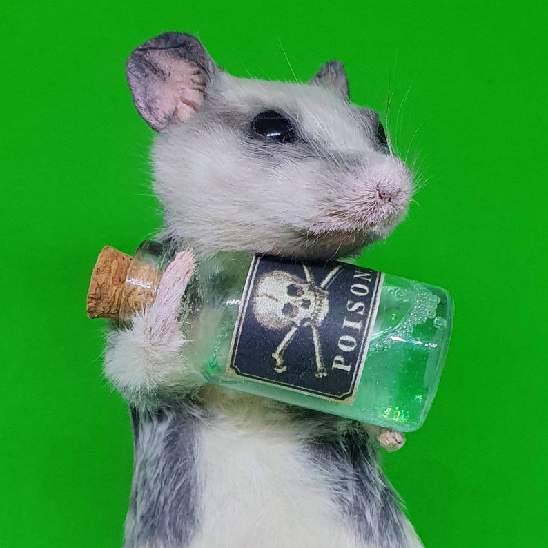 Mouse with poison bottle arsenic taxidermy curio and image 0