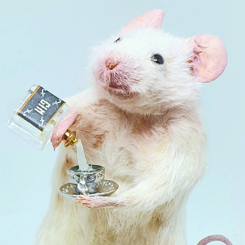 Taxidermy Mouse with GIN and teacup  oddities curio image 0