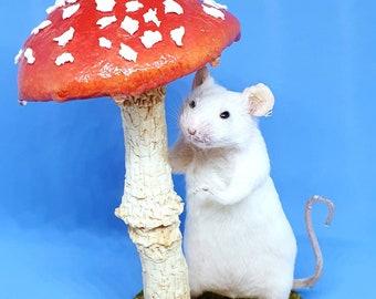 Taxidermy Mouse in rain, hiding under mushroom ~ oddities, curio, fairy