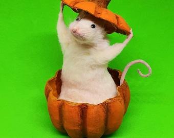 Taxidermy Mouse inside pumpkin, Halloween spooky ~ oddities, curio, curiosities