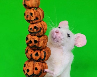 Taxidermy Mouse with stack of pumpkins, Halloween ~ oddities, curio, curiosities