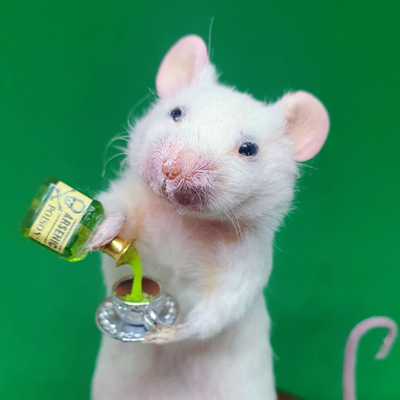 Taxidermy mouse with ARSENIC poison and teacup  oddities image 0