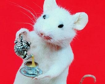 Taxidermy Mouse with TEA ~ oddities, curio, curiosities