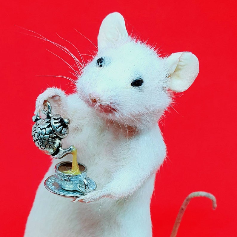 Taxidermy Mouse with TEA  oddities curio curiosities image 0