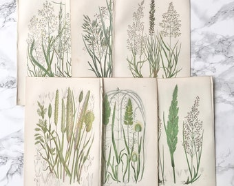 Beautiful set of 6 antique chromolithographs representing grasses plants from Great Britain