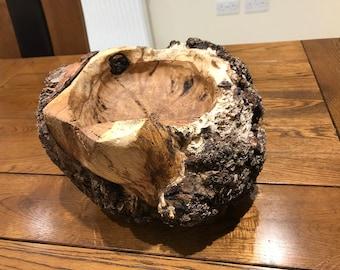 The Fungus Bowl