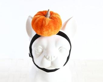Pumpkin Pet Headband, Pet Head Bands Photo Prop, Dog & Cat Accessories, Fall Halloween
