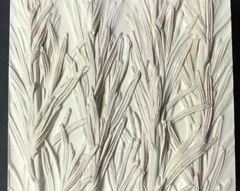 Rosemary in White