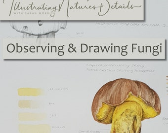 Digital Download:  Observing and Drawing Fungi