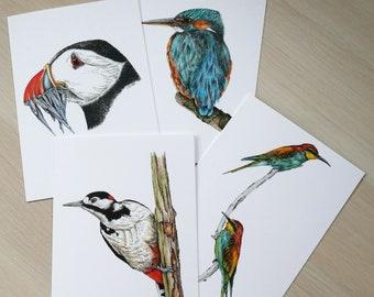 Birds card set (x4 cards)