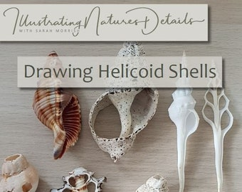 Digital Download: Drawing Helicoid (spiral) shells