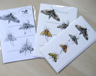 Hawkmoth gift set - Notebook & x2 cards