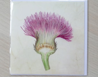 Plume thistle card set (x4 cards)