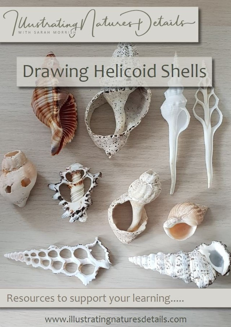 Digital Download: Drawing Helicoid spiral shells image 0