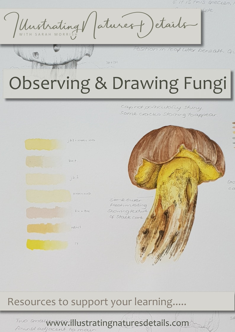Digital Download:  Observing and Drawing Fungi image 0