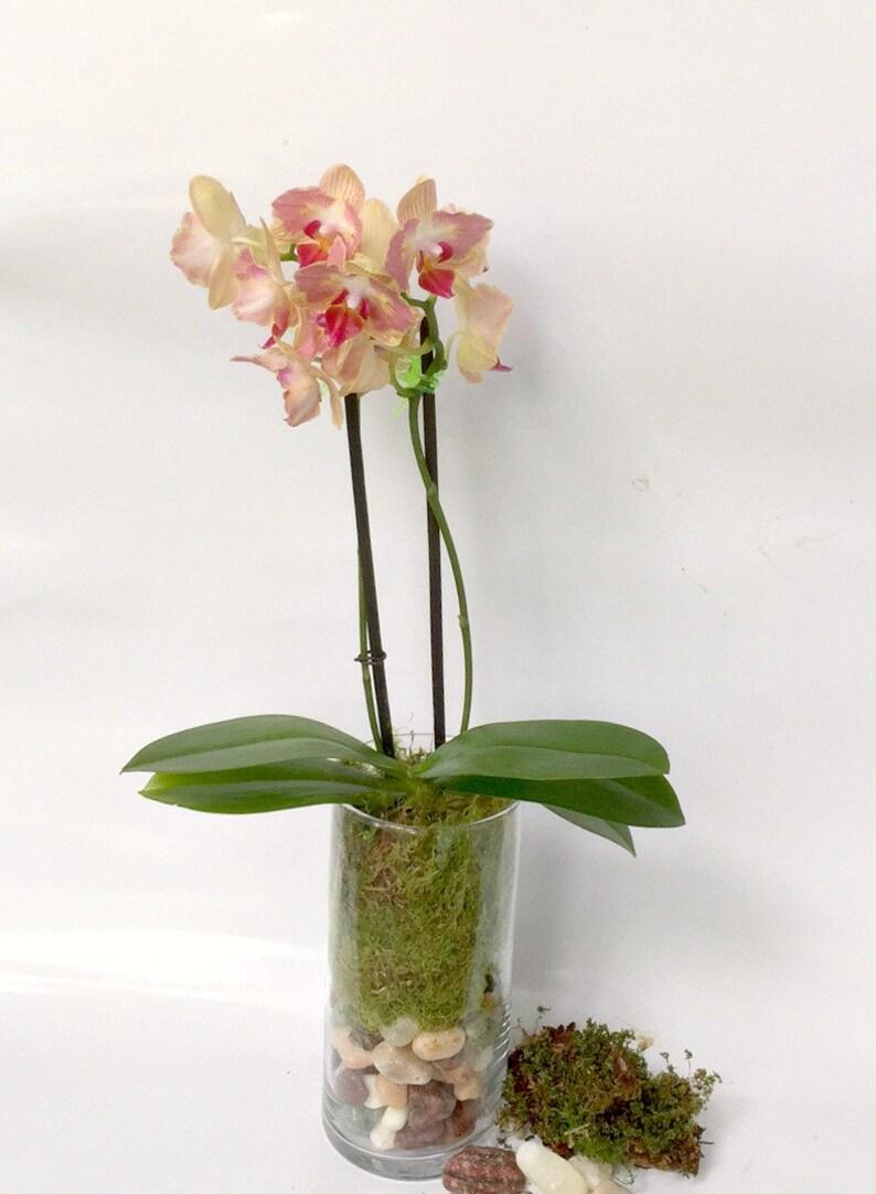 Glass Terrarium Indoor Orchid Terrarium Home Decor Etsy
