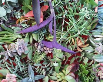 50 Assorted Succulent Cuttings