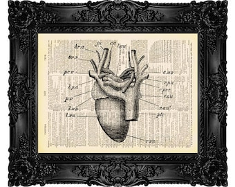 Pigeons Heart - ORIGINAL ARTWORK - Dictionary Art Print Vintage Upcycled Antique Book Page no. 324