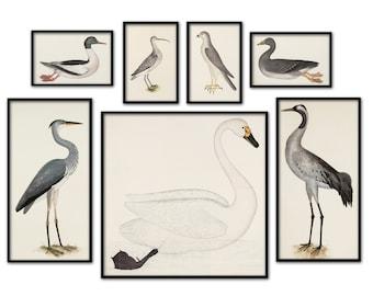 Scandinavian Birds Print Set of 7 Wall Art Decor Vintage Bird Illustration Ornithology Poster Antique Birds Print Bird Decor