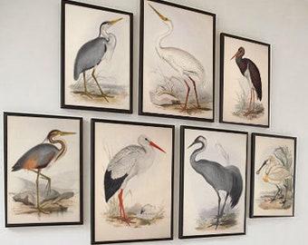 Set of 7 Birds Wall Art Print, Vintage Bird Illustration, Ornithology Poster, Antique Birds Print, Bird Decor